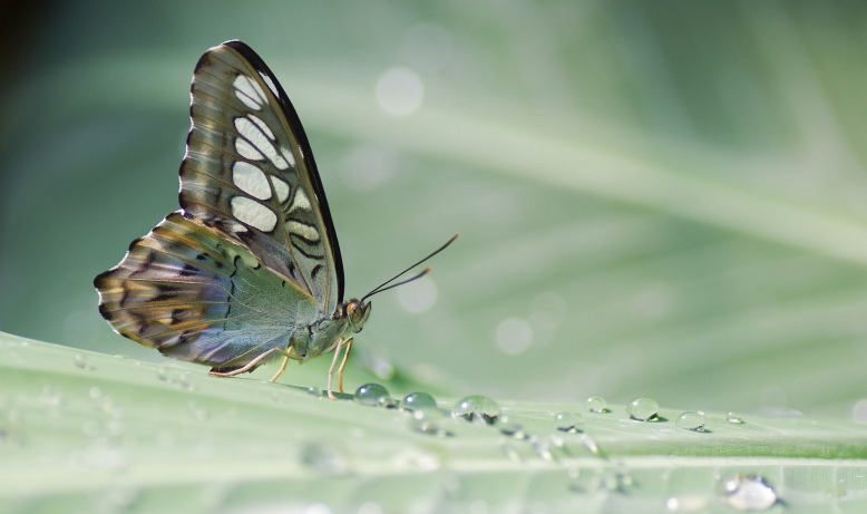 tropical-butterfly