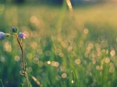 7032004-field-flowers