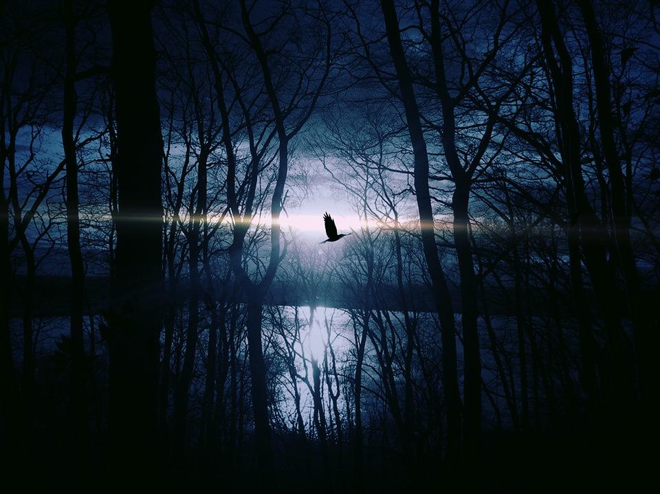bird-383245_960_720.jpg