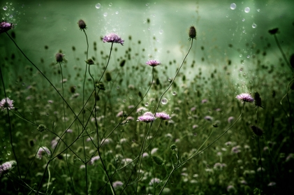 flower_fields_forever_by_robinroels