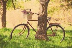 mood-bike-wheel-shopping-basket-flower-flowers-purple-nature-grass-green-tree-tree-leaves-background-wallpaper-widescreen-full-screen-widescreen-hd-wallpapers