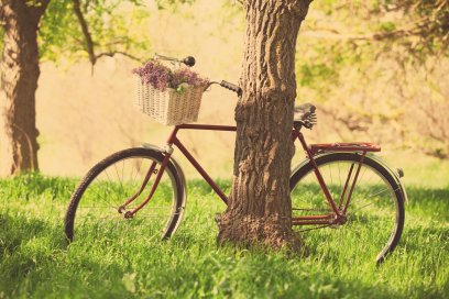 mood-bike-wheel-shopping-basket-flower-flowers-purple-nature-grass-green-tree-tree-leaves-background-wallpaper-widescreen-full-screen-widescreen-hd-wallpapers