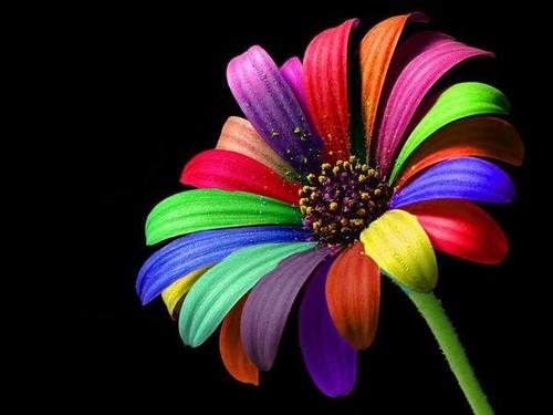 rainbow-flower